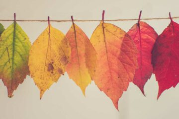 brightly colored leaves representing change